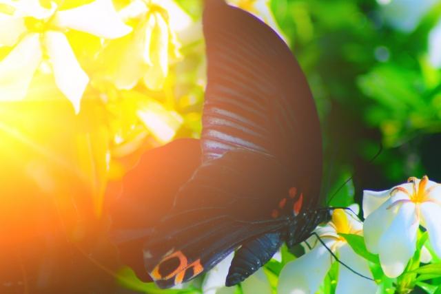思考がさなぎから蝶になる