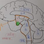 脳幹部休息法